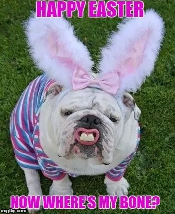 Funny Easter Memes For Adults : funny, easter, memes, adults, Funny, Easter, Memes, Images, Holiday
