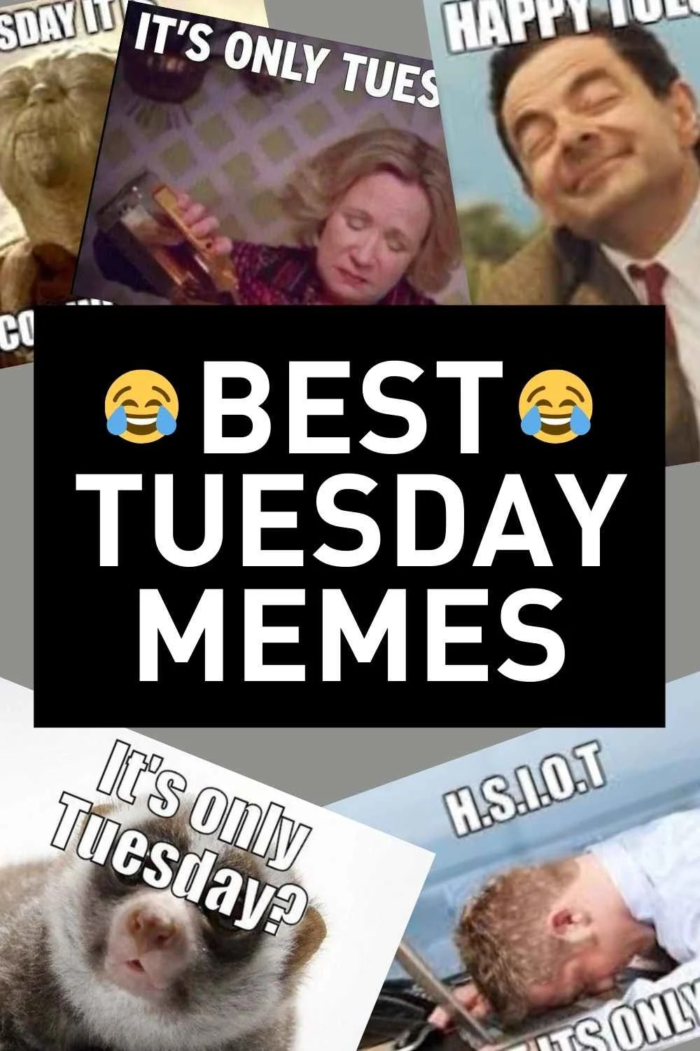 Hilarious Tuesday Memes : hilarious, tuesday, memes, Tuesday, Memes, Funny, Images, Share