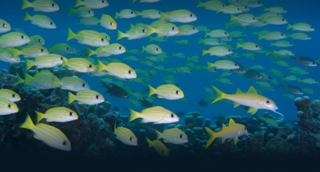 Nikon SB-N10 Underwater Speedlight sample image 04