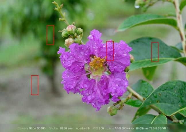 Nikon D3300 ISO-Sample