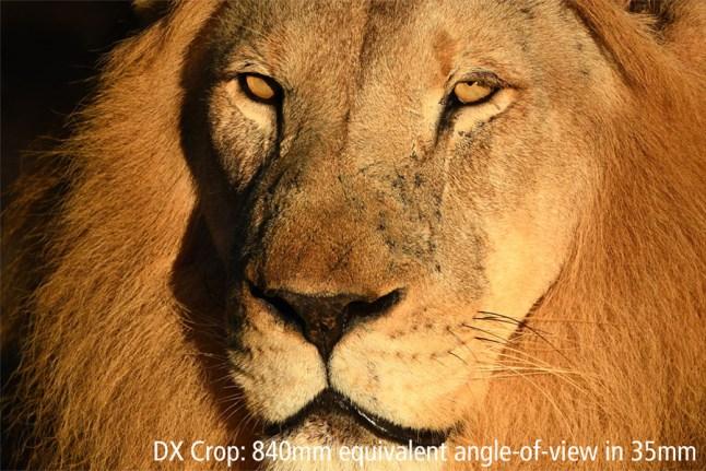 Nikon AF-S Nikkor 180-400mm f/4E TC1.4 FL ED VR Lens Sample Image