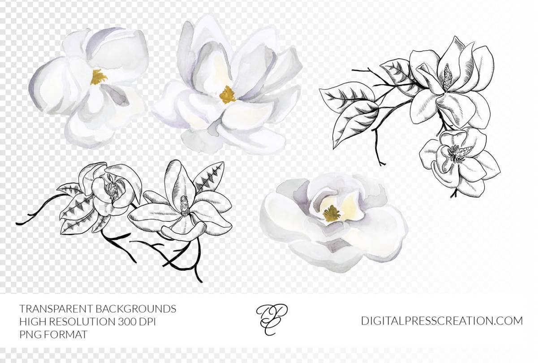 Magnolia Images, Magnolias Clipart, Watercolor Louisiana Magnolia, Floral Clipart Watercolor