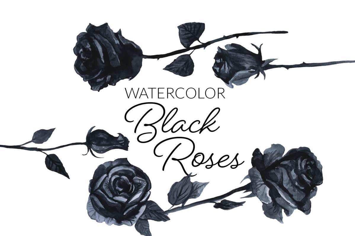 Watercolor Black Roses