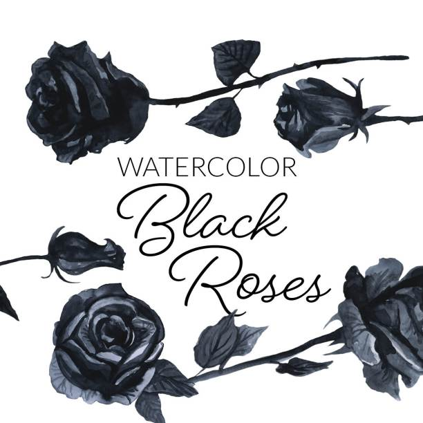 Watercolor Black Roses