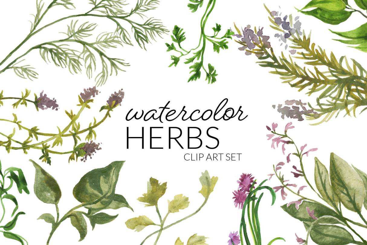 Watercolor Herbs Clipart