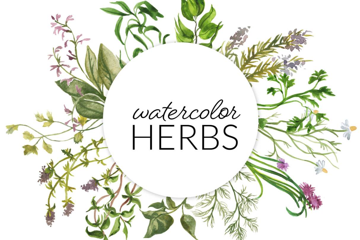 Watercolor Herbs clipart illustration