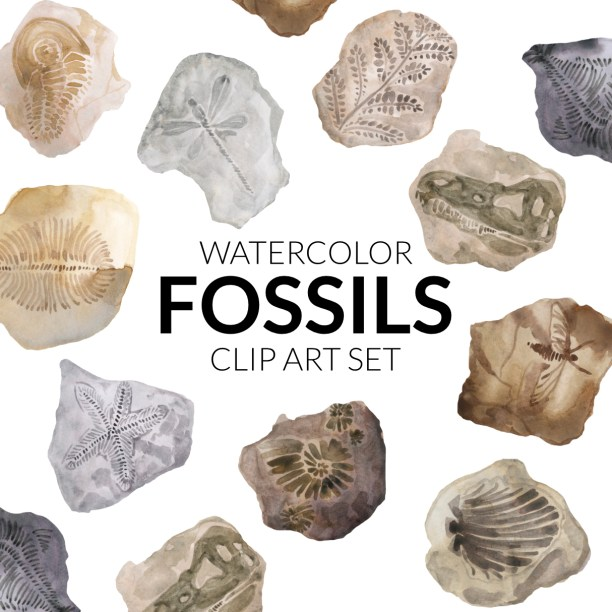 Watercolor fossil clipart, archeology, science artwork fossils illustration