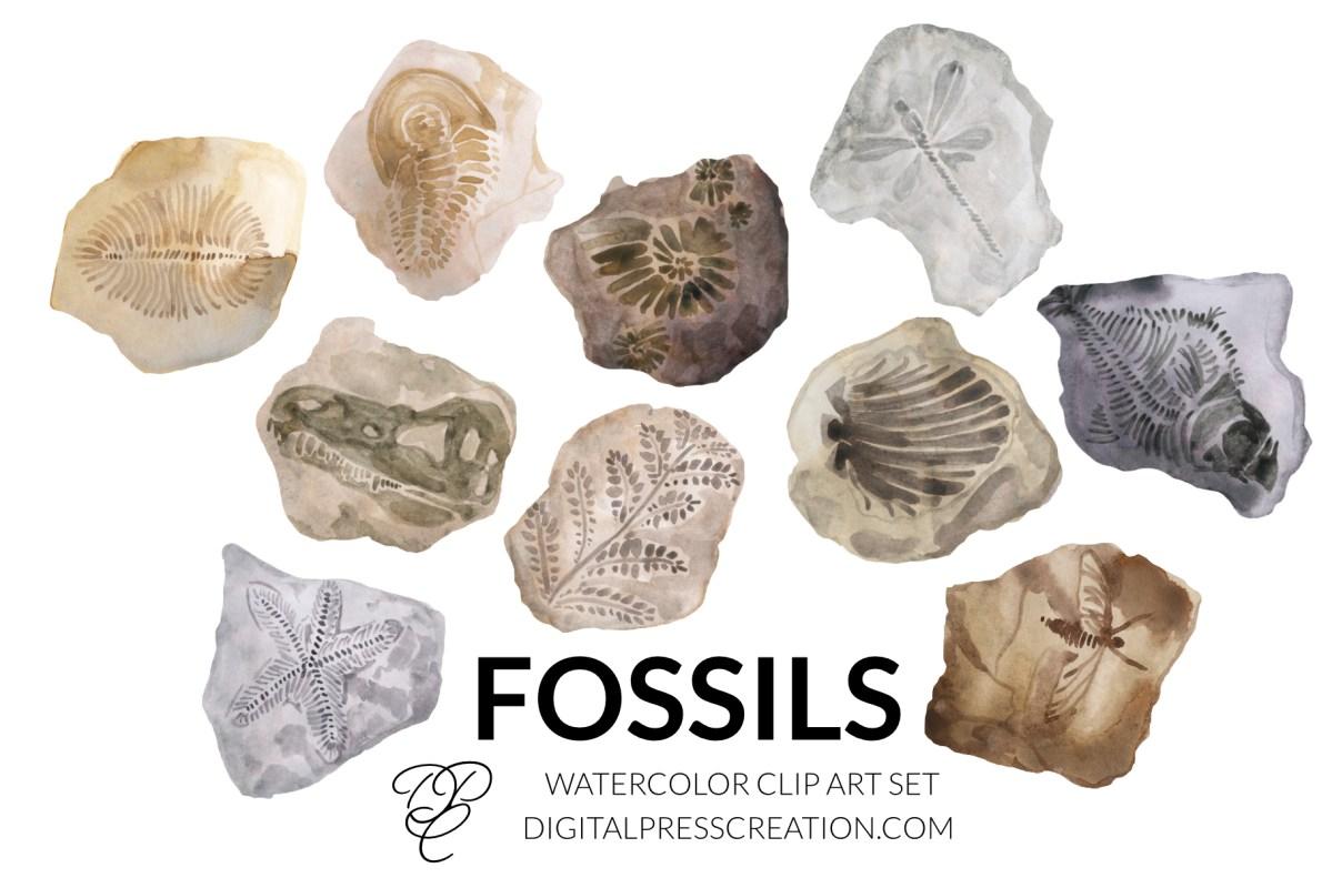 Watercolor fossils artwork clipart