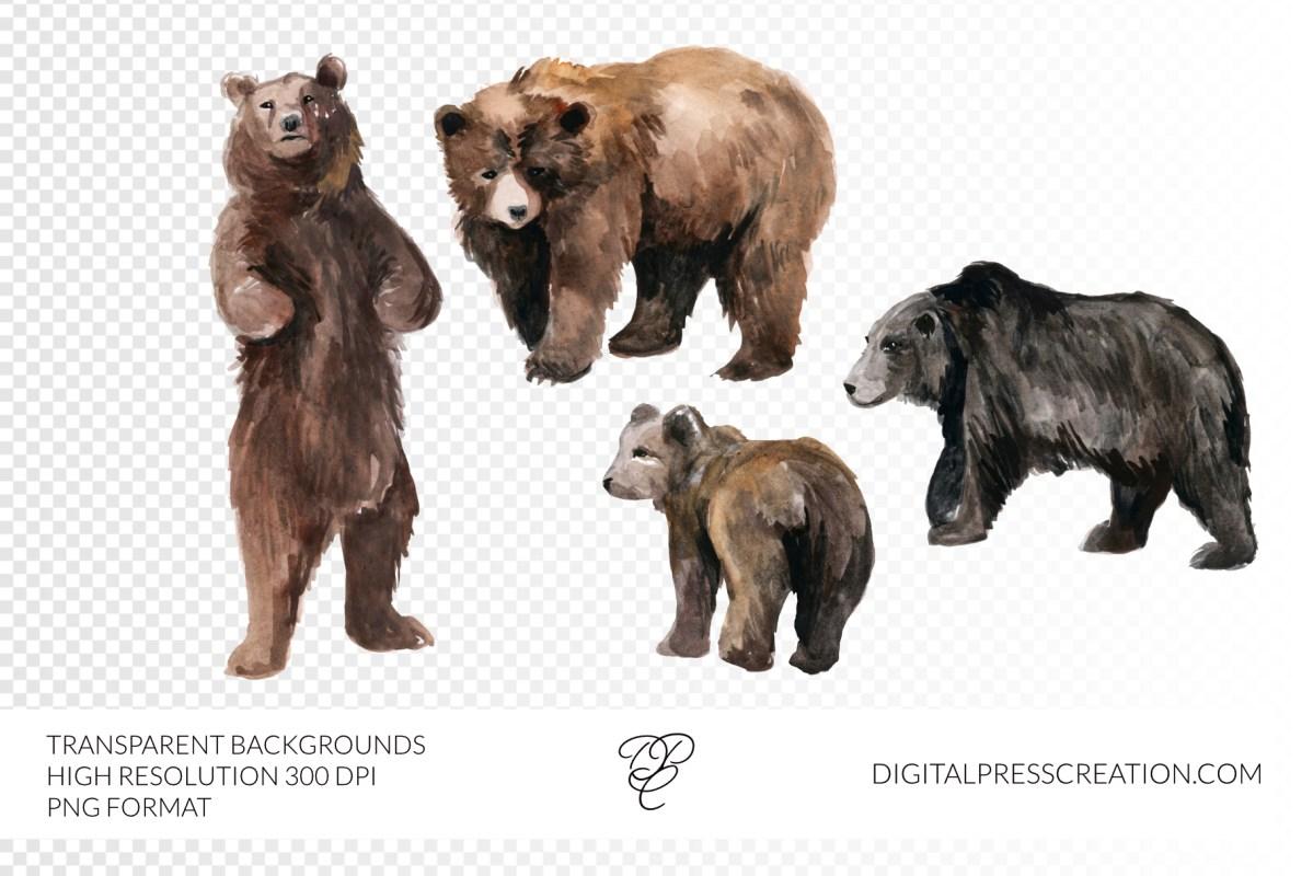 Watercolor bears artwork, clip art, digital bear watercolor brown bears
