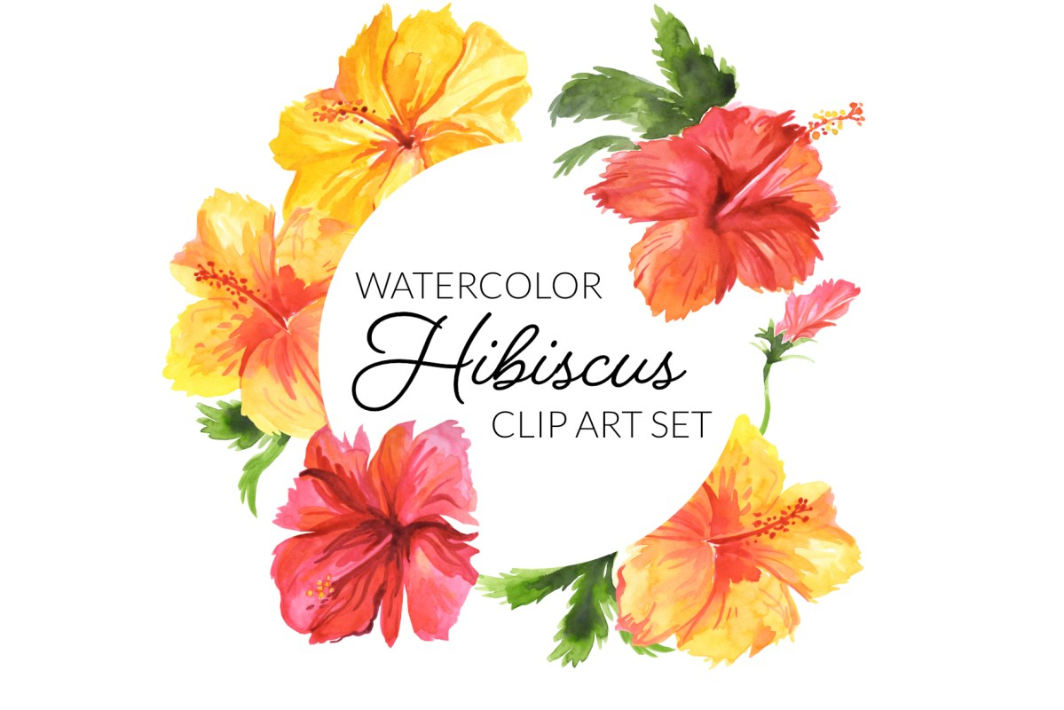 Watercolor Hibiscus flowers, tropical flower clipart, Hawaiian flower illustration, beautiful floral tropics watercolor clip art