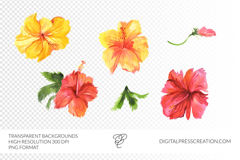 Transparent watercolor hibiscus flowers hawaiian clipart, floral clipart, bahamas art, digital floral art, commercial use