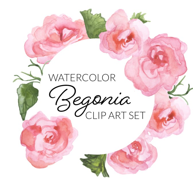 Watercolor begonias clipart digital clipart pink flowers floral illustration transparent background digital press creation