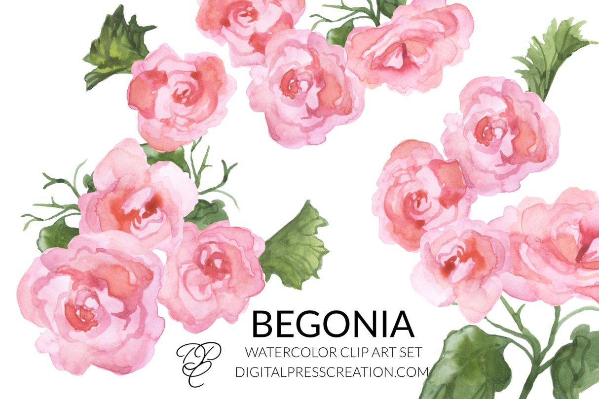Watercolor begonias clipart digital clipart digital press creation florals transparent png