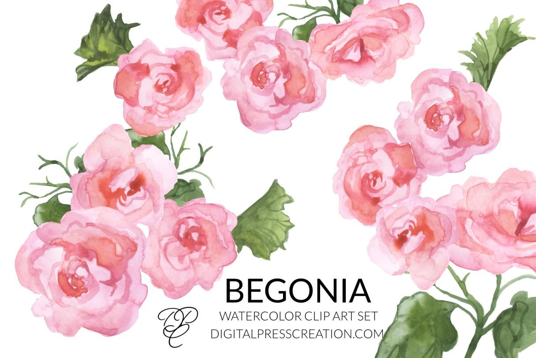 Watercolor begonias clipart digital clipart digital press creation florals transparent png