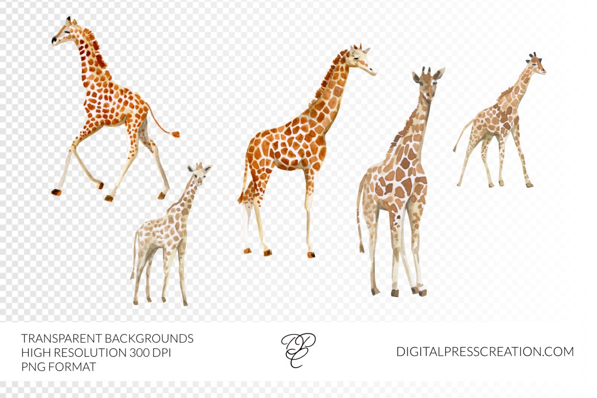 Watercolor giraffes clipart transparent illustration baby giraffe cute clipart