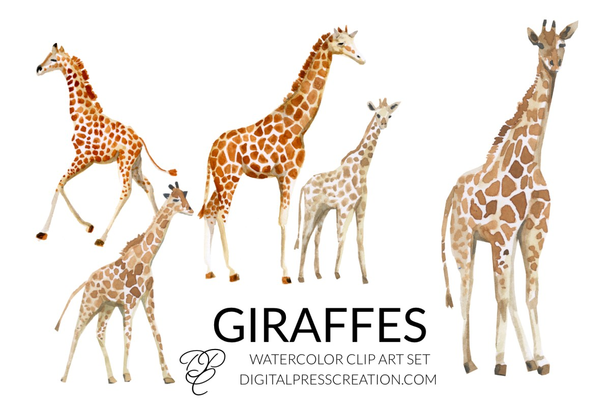 Watercolor giraffe clipart african animal cute clipart, giraffes clip art, giraffe illustration