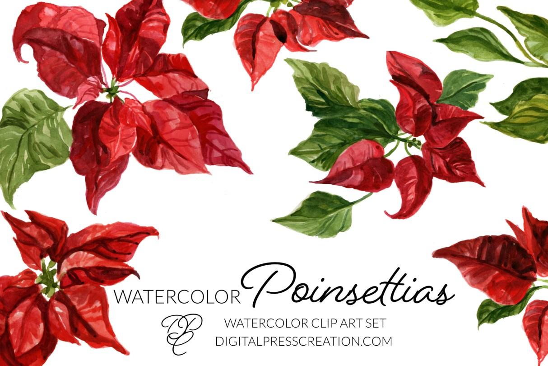 Watercolor Poinsettias clipart digital download clipart 300dpi png