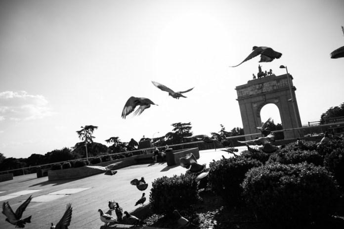 Foto Nikon Z50 palomas