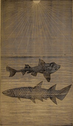 """Port Jackson shark – Cheiracanthus"" illustration from ""God in nature and revelation"" (1875)"