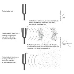 Venn Diagram Of Transverse And Longitudinal Waves 2001 Ford Ranger Stereo Wiring Wave Labeled