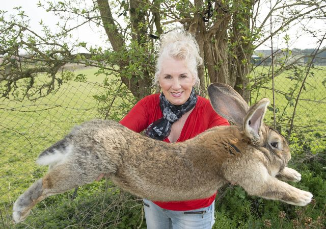 Annette Edwards and a giant rabbit