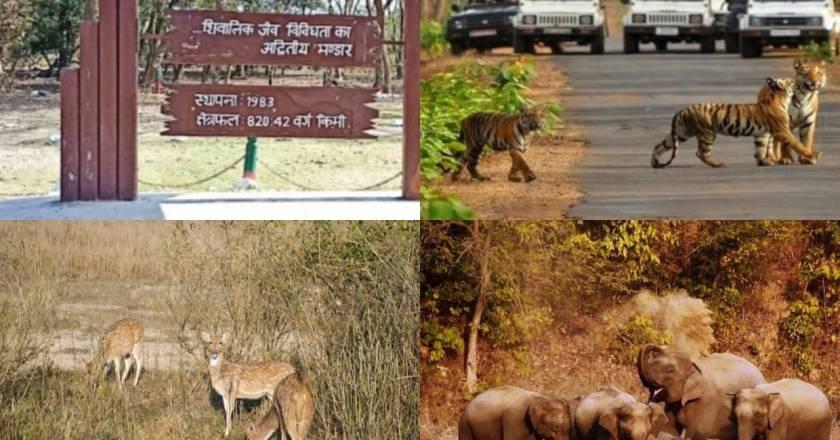 Uttarakhand's Rajaji Tiger Reserve opens