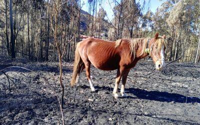 Digitanimal dans les feux de l'Espagne et du Portugal.