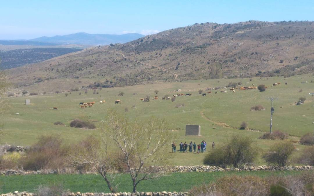 First test of Sensowave, within the AFarCloud project, in cattle about the extensive grazing systems