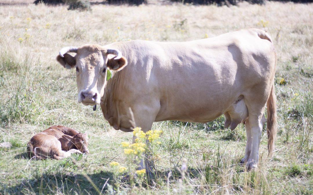 El mundo rural en lucha con el turismo rural