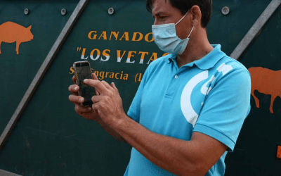 Tres ganaderos nos cuentan su experiencia: del cencerro al collar GPS