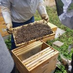 Dans une ruche de l'association Espero.