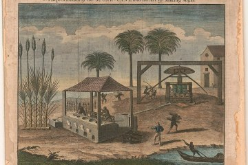 an engraving of a sugar plantation
