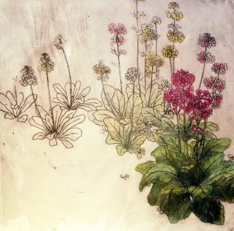 Anna Perlin shortlisted for Jacksons Impressions of Nature printmaking competition