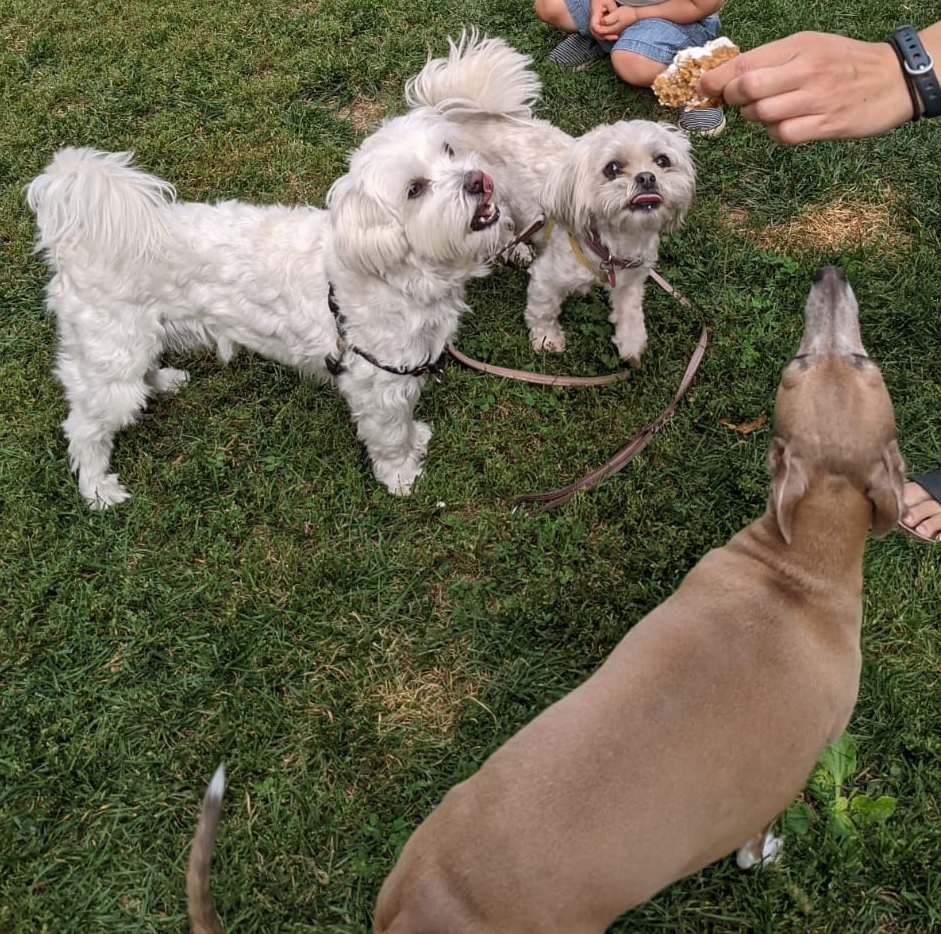 Digsy and friends staring at piece of cake