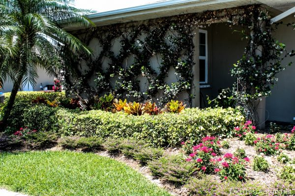 Adding the color orange to landscaping.