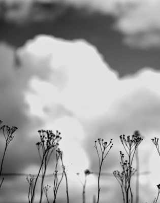Begravelsen III digt af Claus Gall