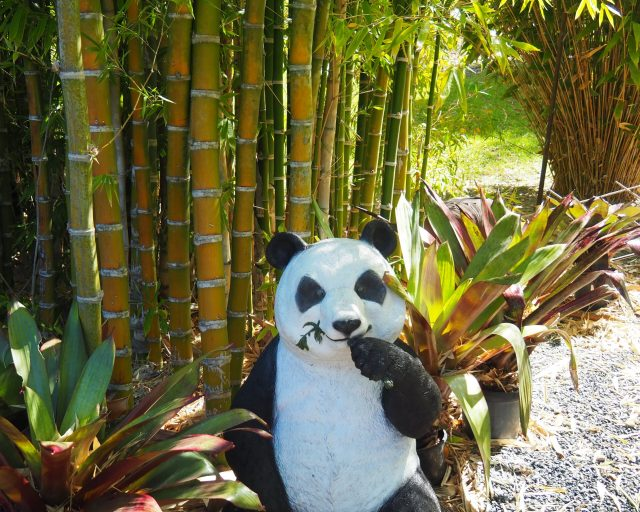 Panda in Queensland? 1