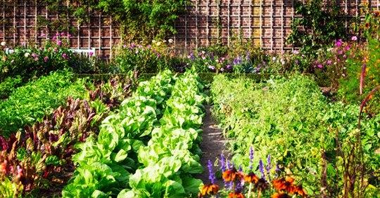 Soda bikarbona u bašti: Cvijeće buja, puževi bježe, zemlja se čisti