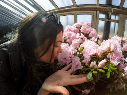 Jedan od staklenika sa cvećem