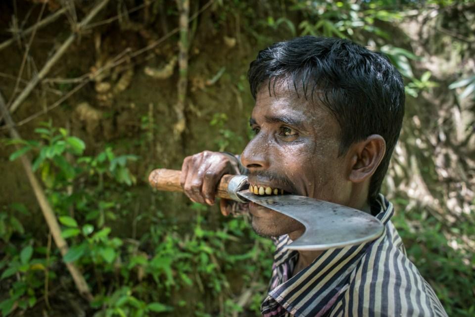mayalok-filmproduktion-bamboo-stories-wald-07