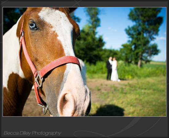 wedding portrait with horse