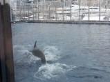 un piccolo tuffo del delfino