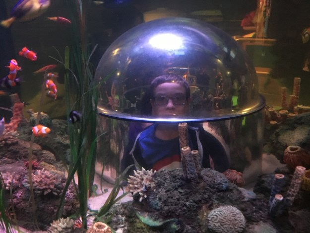 Me swimming with the fish
