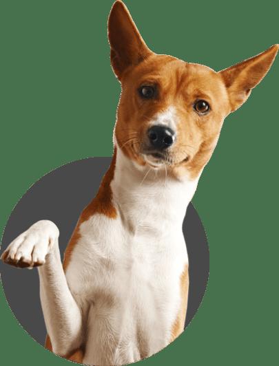 dog_img