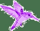 dillybird1