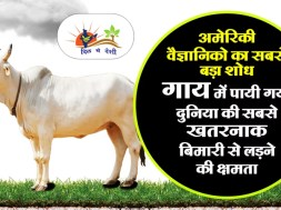 research on cow about hiv aids