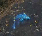 Amazing-Street-art-of-David-Zinn-Sluggo-312
