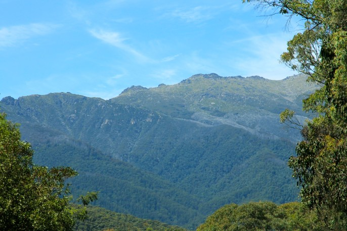 Scammell's Ridge Lookout (NSW)