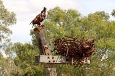 Blackall - Eagle and Nest Sculpture (Qld)