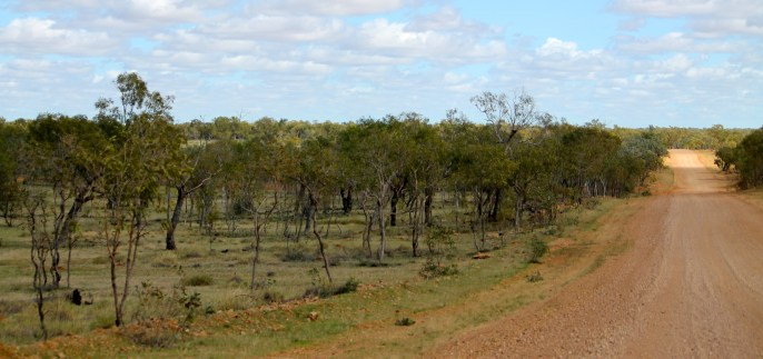 Gregory To Camooweal (Qld)
